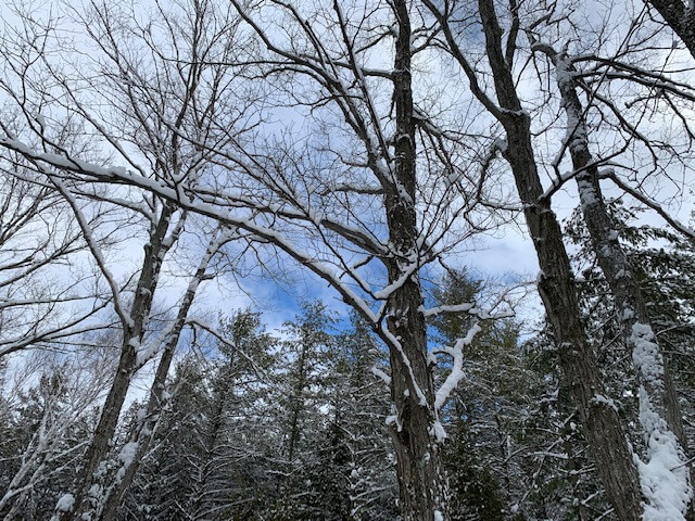A glimpse of blue sky on a February day at Three Springs Land Trust.