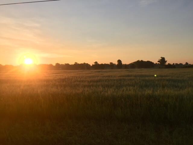Sunset over Door County field