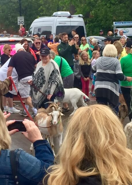 The goat parade